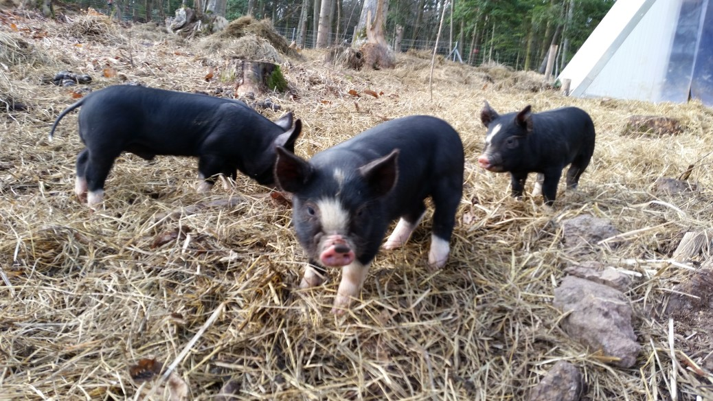 Mein Schwein heißt Miss Ellie
